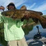 Big Arizona Catfish