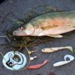 Swimbait Walleye