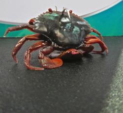 Savage Gear's 3D PVC Crab