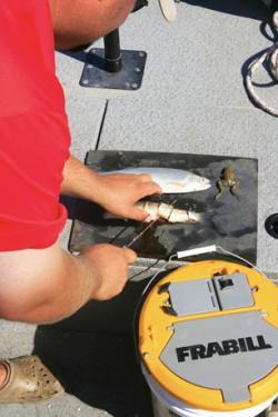 Use cut bait