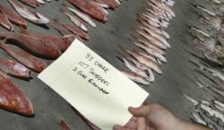 Seized Fish