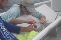 Putting a tag in tuna