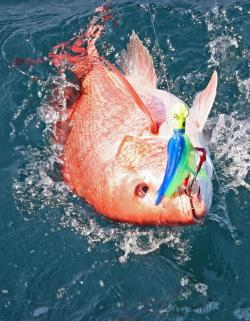Catching red snapper