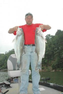 Stripers in cold water