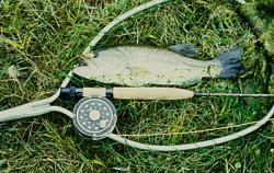 Flyrod bass on eelworm