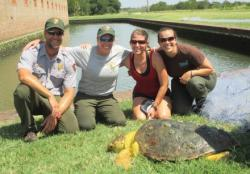 Rescuers and sea turtle