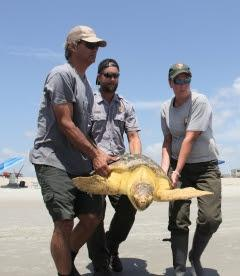 Releasing the sea turtle