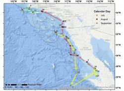 shark traveled more than 1,000 miles