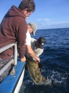 Landing a giant grouper