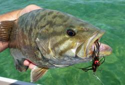 Smallie on Streamer